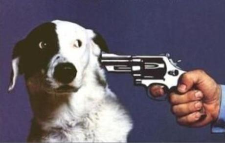 shoot-this-dog2