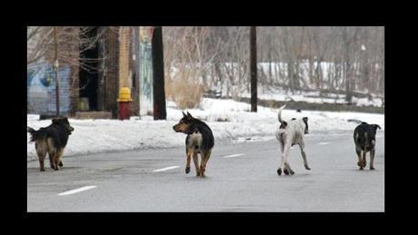 detroitdogs_08